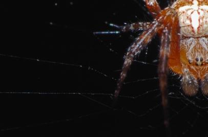 Half a Spider